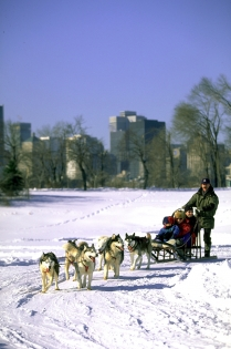 Dog sled ride, Parc Jean-Drapeau (Larose, Sébastien © Parc Jean-Drapeau; Larose, S. PO: Tourisme Montréal. All Rights Reserved.)