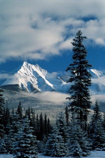 Mountains and trees in winter in Kootenay National Park (Photographer: Unknown  Tourism BC. All Rights Reserved.)