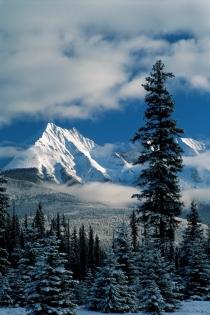 Montages et arbres en hiver dans le Parc National de Kootenay (Photographe Inconnu © Tourism BC Tourism BC Tous droits réservés)