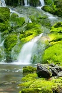 Cascadă și roci cu mușchi (Holden, Wendy © Holden, Wendy; VisaPro.ca. Toate drepturile rezervate.)