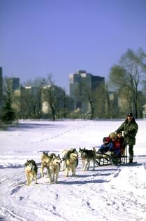 Plimbare cu sania trasă de câini, Parcul Jean-Drapeau (Larose, Sébastien © Parc Jean-Drapeau; Larose, S. Tourisme Montréal. Tdr)